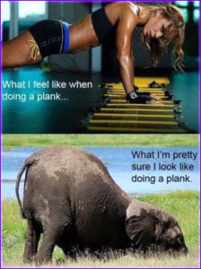 elephantplank