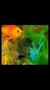 worried goldfish