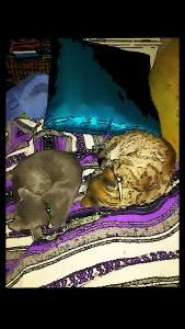 Cats on oKatniss